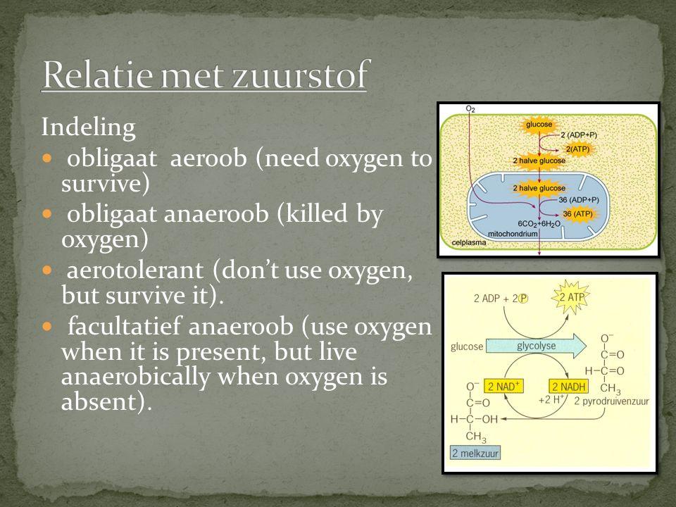 Relatie met zuurstof Indeling obligaat aeroob (need oxygen to survive)