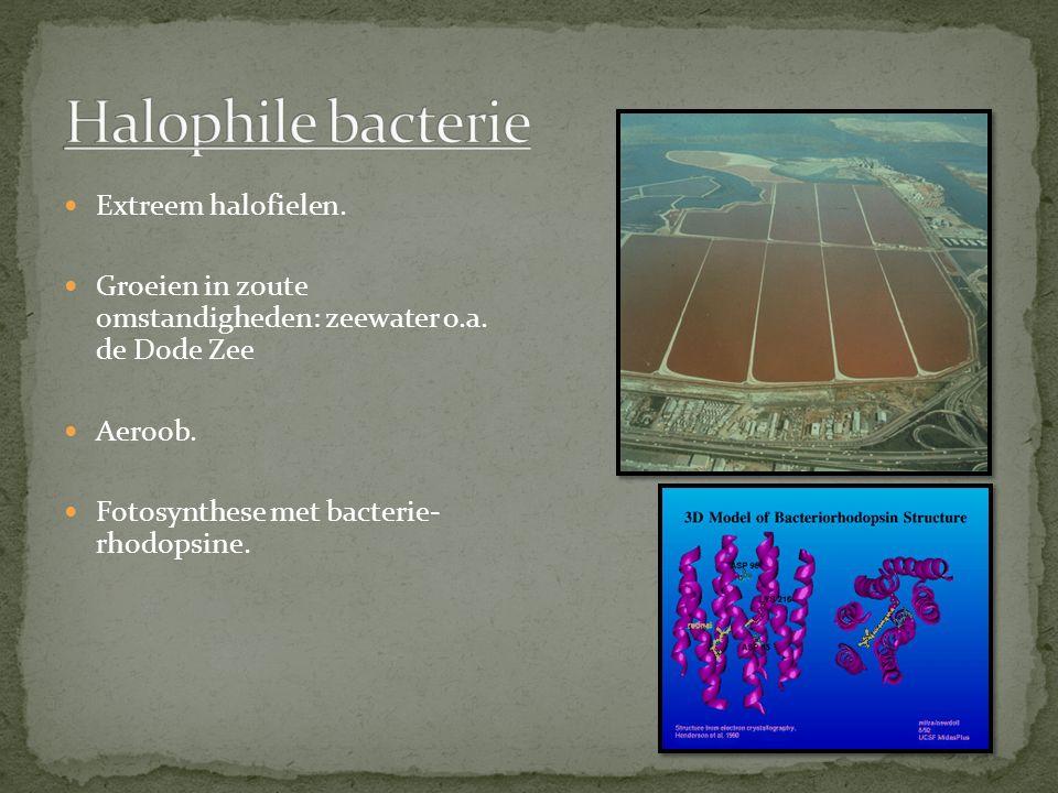 Halophile bacterie Extreem halofielen.