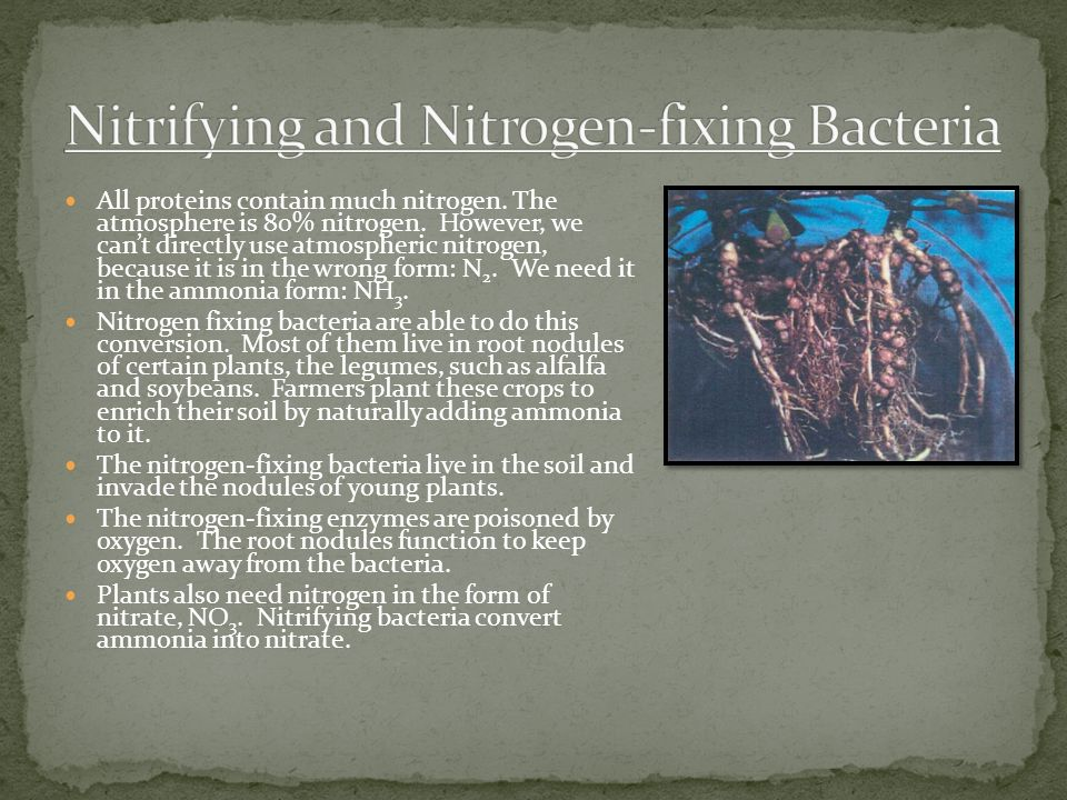 Nitrifying and Nitrogen-fixing Bacteria