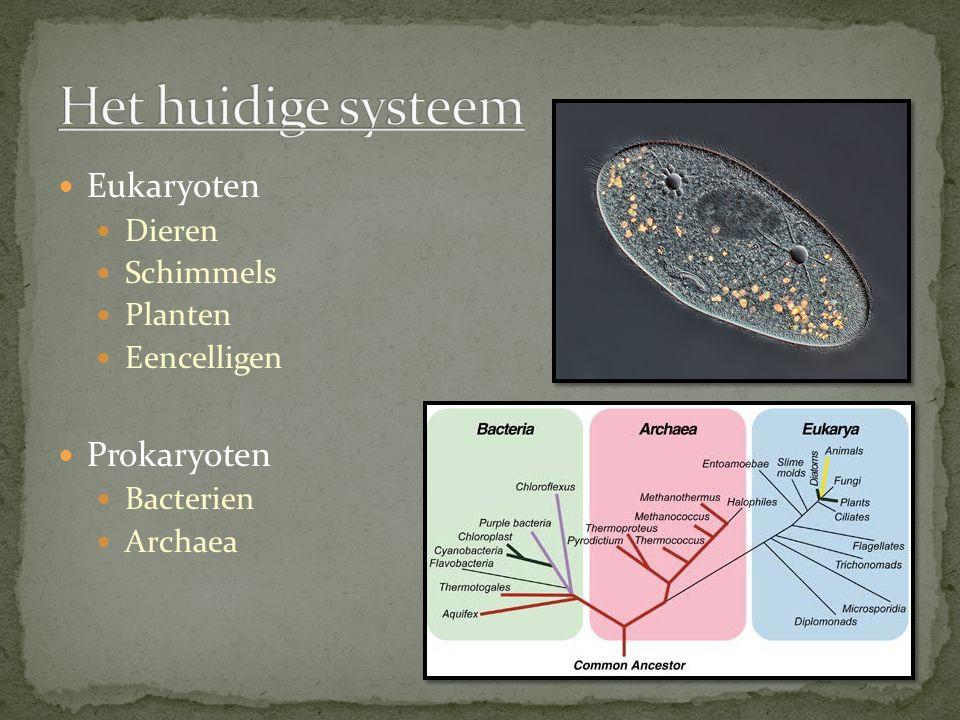 Het huidige systeem Eukaryoten Prokaryoten Dieren Schimmels Planten