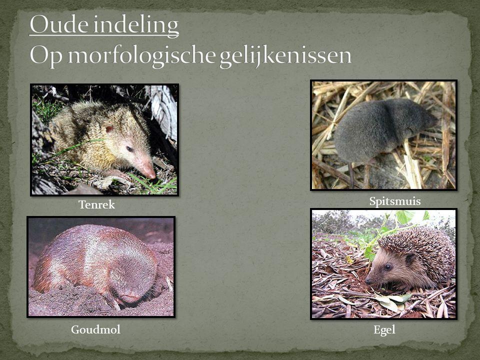 Oude indeling Op morfologische gelijkenissen