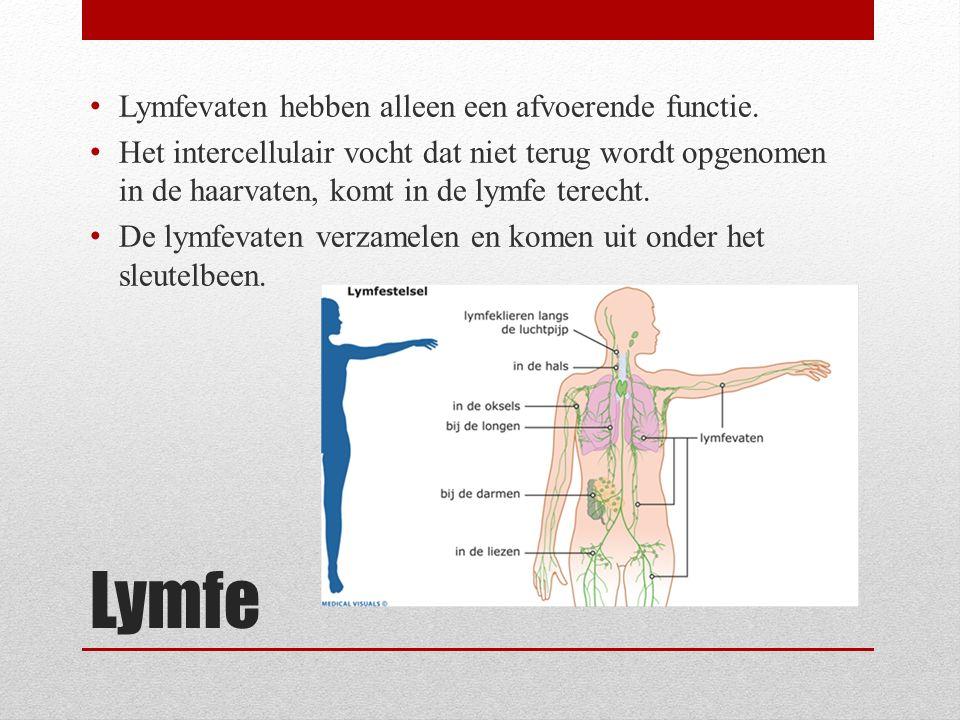 Lymfe Lymfevaten hebben alleen een afvoerende functie.