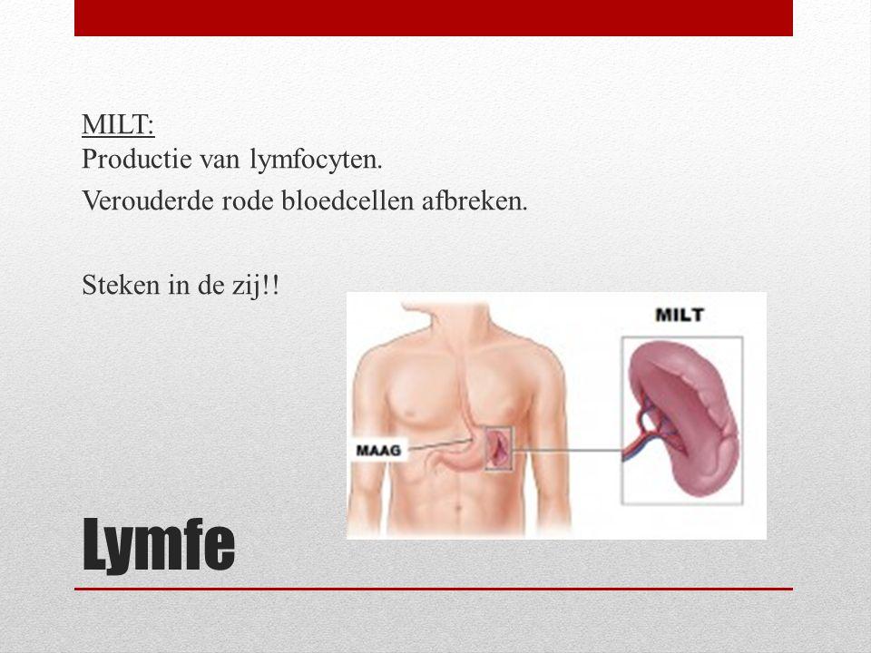 MILT: Productie van lymfocyten. Verouderde rode bloedcellen afbreken