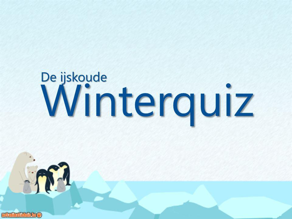 Winterquiz De ijskoude