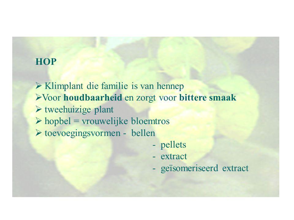 HOP Klimplant die familie is van hennep. Voor houdbaarheid en zorgt voor bittere smaak. tweehuizige plant.