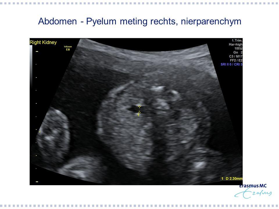 Abdomen - Pyelum meting rechts, nierparenchym