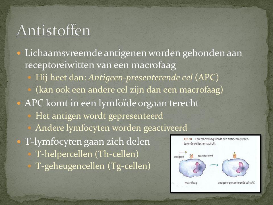 Antistoffen Lichaamsvreemde antigenen worden gebonden aan receptoreiwitten van een macrofaag. Hij heet dan: Antigeen-presenterende cel (APC)