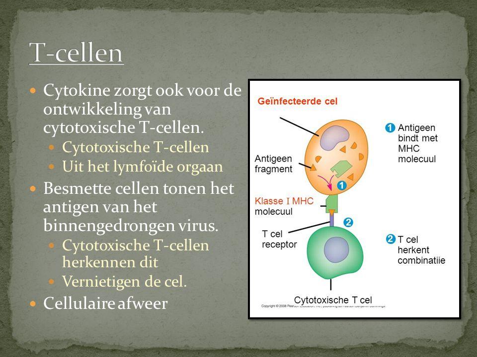 T-cellen Cytokine zorgt ook voor de ontwikkeling van cytotoxische T-cellen. Cytotoxische T-cellen.