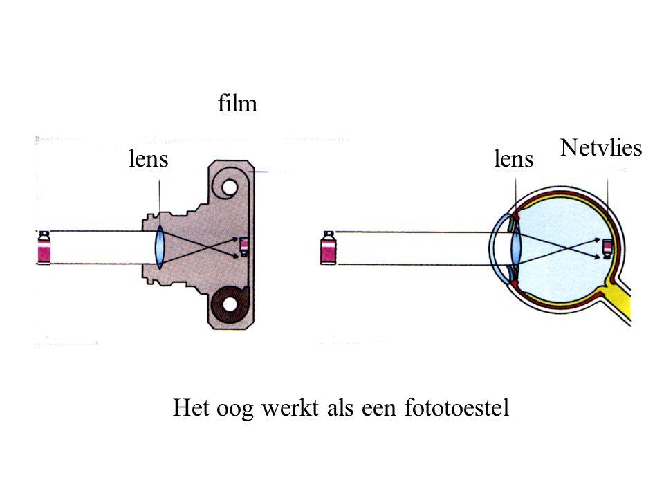 film Netvlies lens lens Het oog werkt als een fototoestel