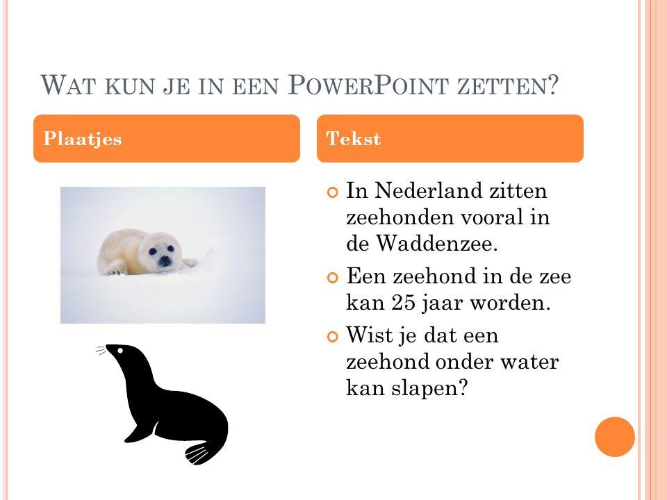 Wat kun je in een PowerPoint zetten