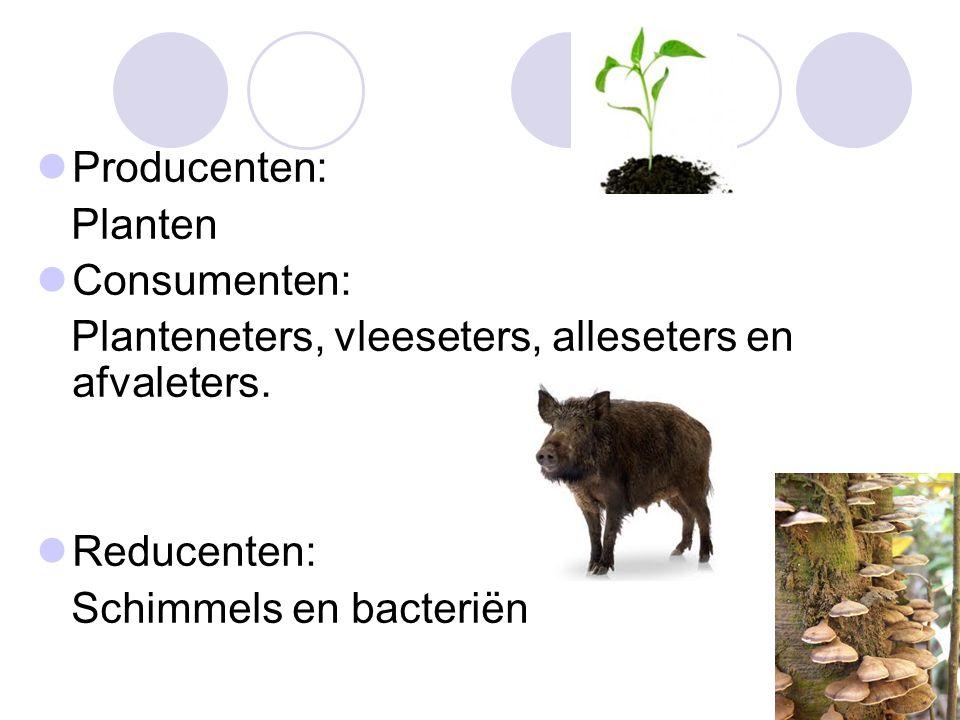 Producenten: Planten. Consumenten: Planteneters, vleeseters, alleseters en afvaleters. Reducenten: