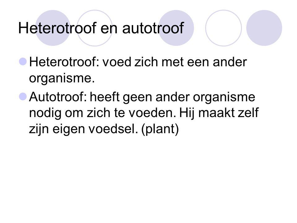 Heterotroof en autotroof