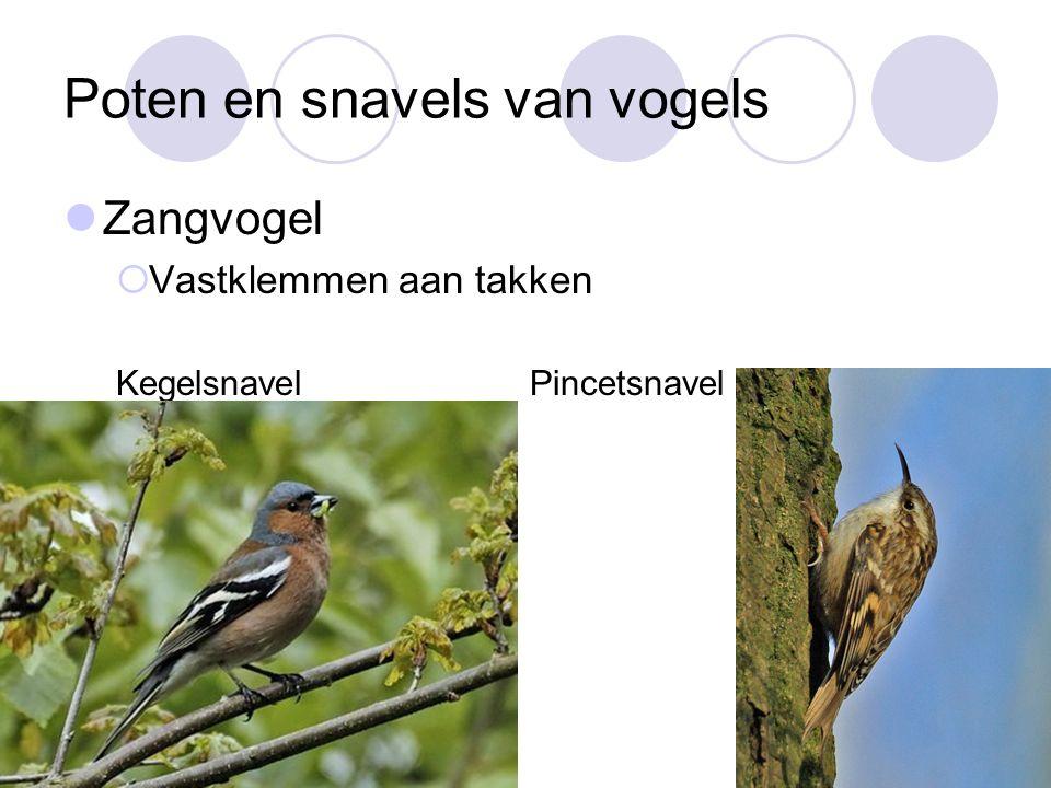 Poten en snavels van vogels
