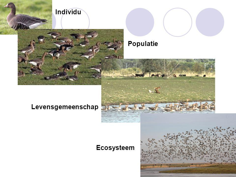 Individu Populatie Levensgemeenschap Ecosysteem