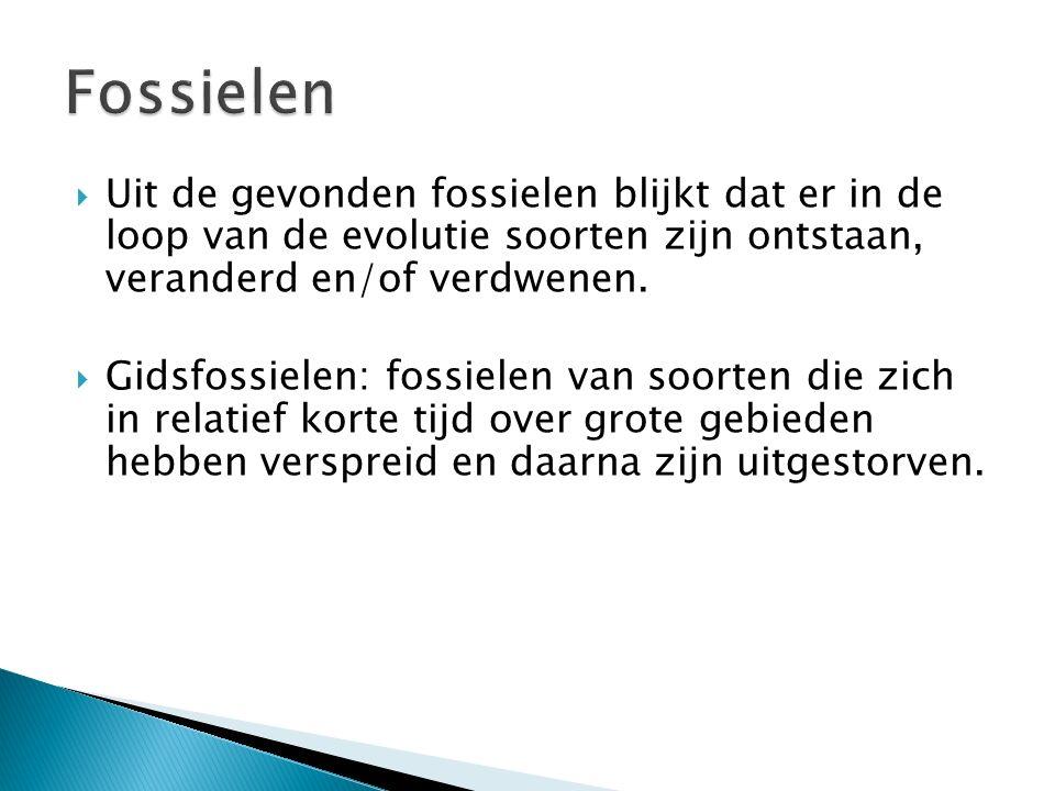 Fossielen Uit de gevonden fossielen blijkt dat er in de loop van de evolutie soorten zijn ontstaan, veranderd en/of verdwenen.
