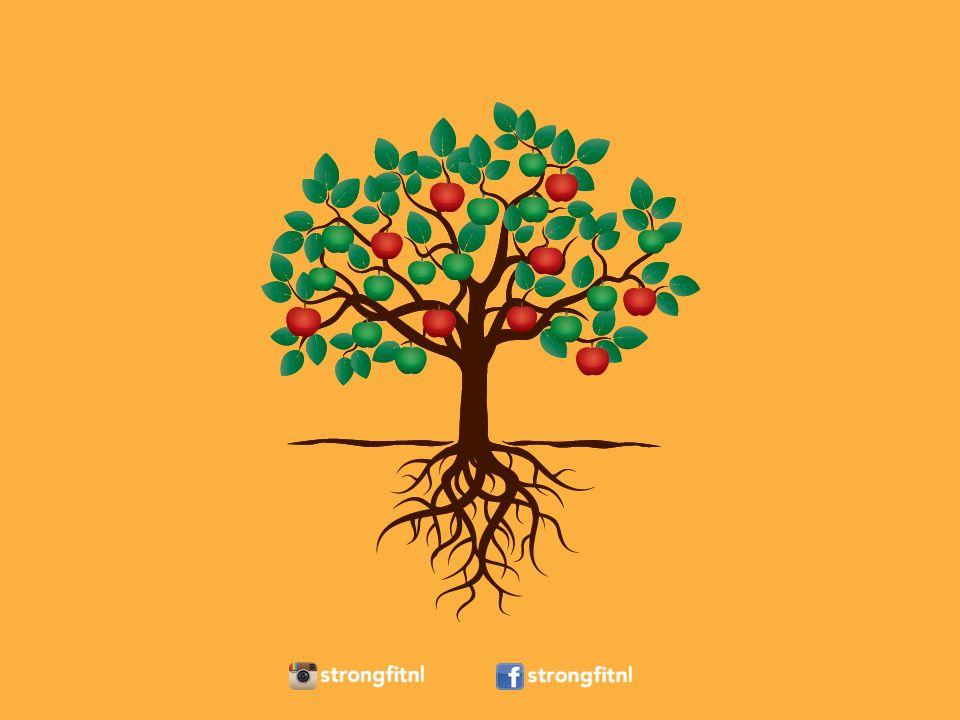 Vruchten: het oppervlakkige