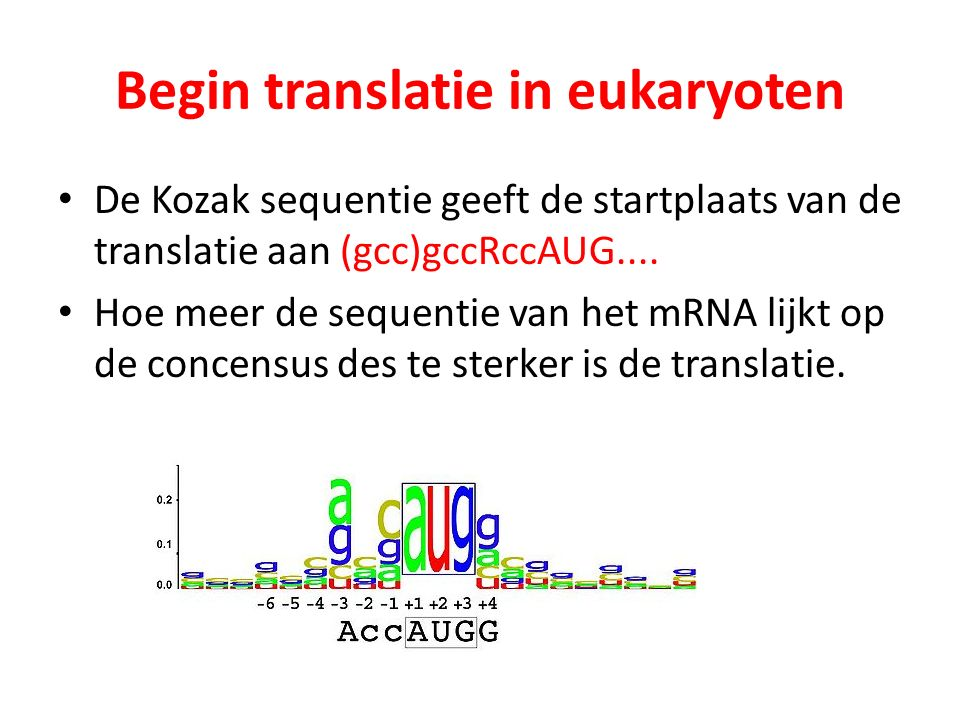 Begin translatie in eukaryoten