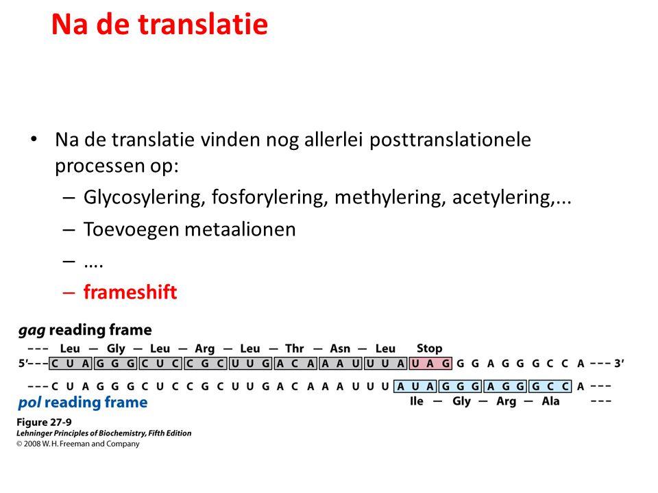 Na de translatie Na de translatie vinden nog allerlei posttranslationele processen op: Glycosylering, fosforylering, methylering, acetylering,...