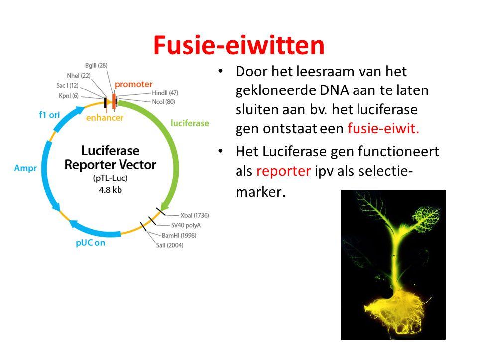 Fusie-eiwitten Door het leesraam van het gekloneerde DNA aan te laten sluiten aan bv. het luciferase gen ontstaat een fusie-eiwit.