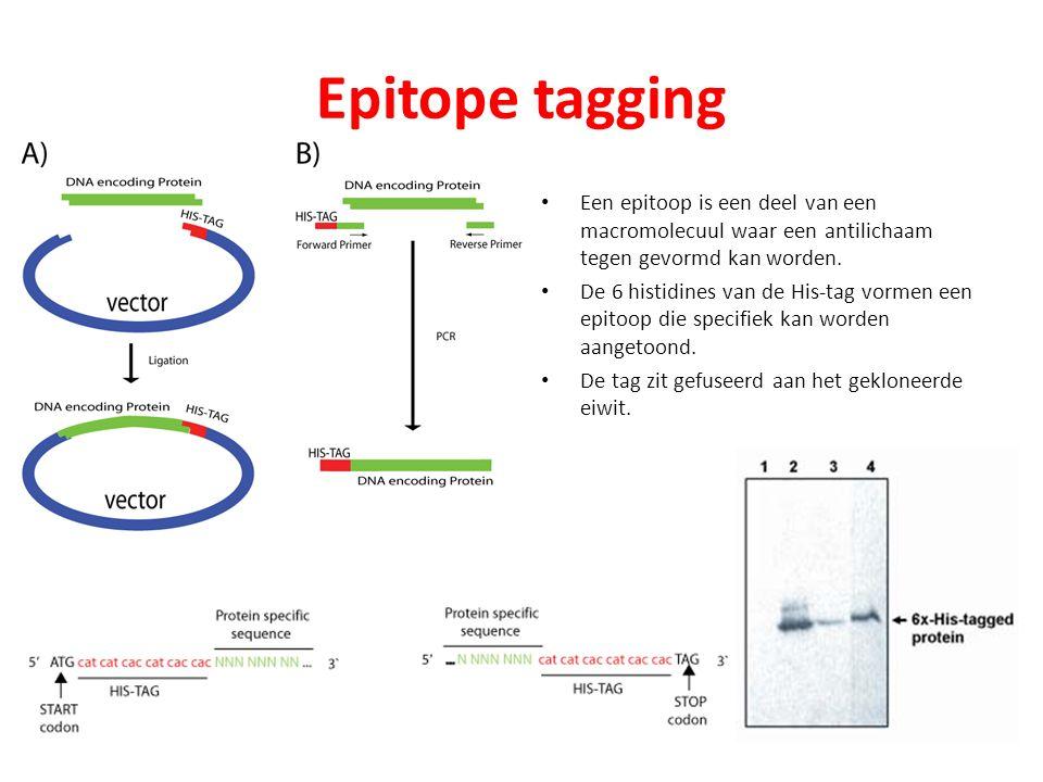 Epitope tagging Een epitoop is een deel van een macromolecuul waar een antilichaam tegen gevormd kan worden.