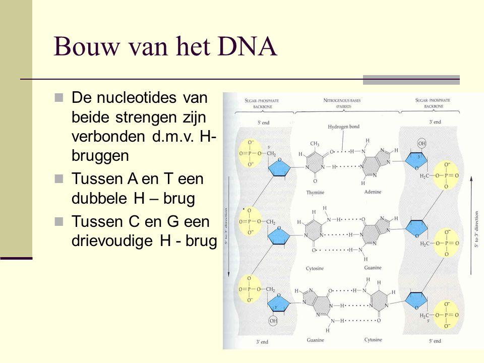 Bouw van het DNA De nucleotides van beide strengen zijn verbonden d.m.v. H-bruggen. Tussen A en T een dubbele H – brug.
