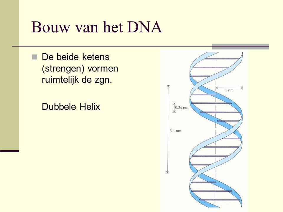 Bouw van het DNA De beide ketens (strengen) vormen ruimtelijk de zgn.