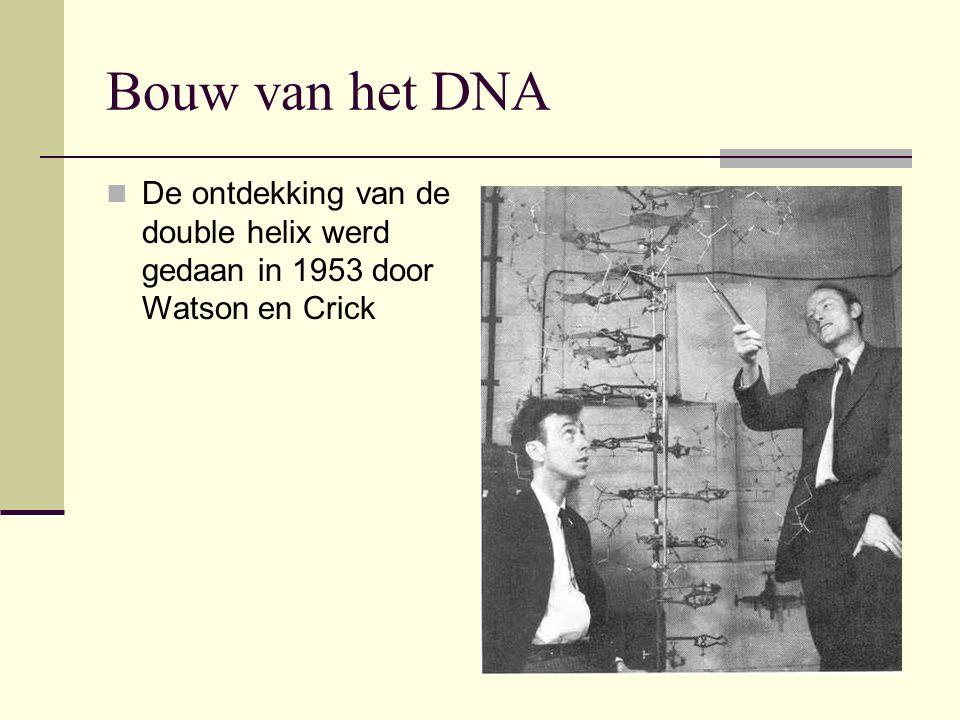 Bouw van het DNA De ontdekking van de double helix werd gedaan in 1953 door Watson en Crick