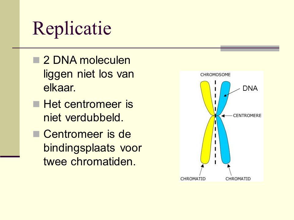 Replicatie 2 DNA moleculen liggen niet los van elkaar.