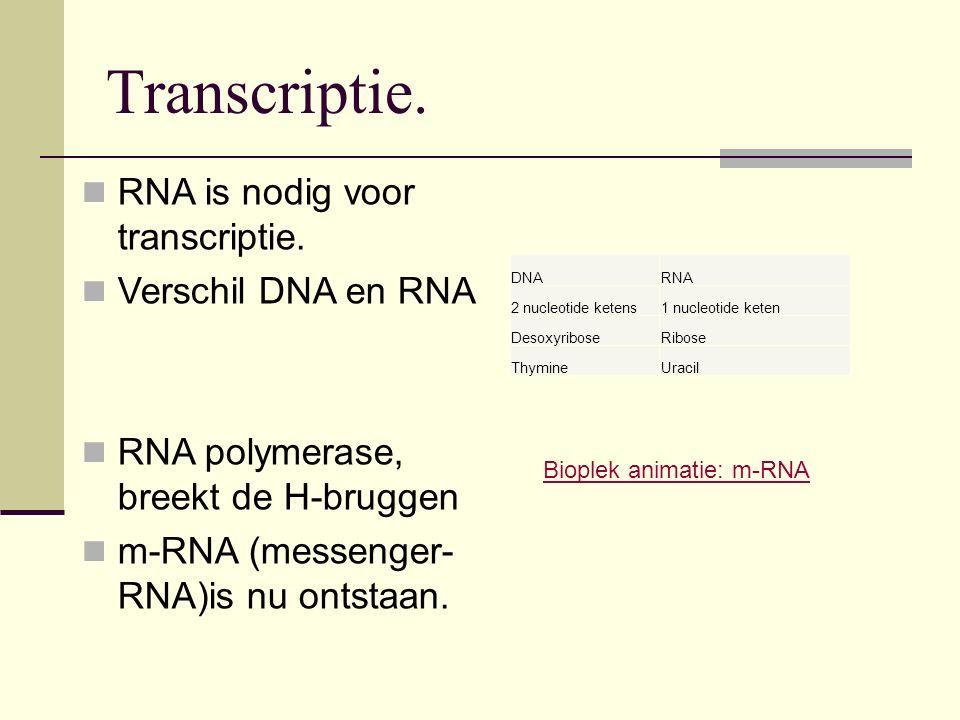 Transcriptie. RNA is nodig voor transcriptie. Verschil DNA en RNA