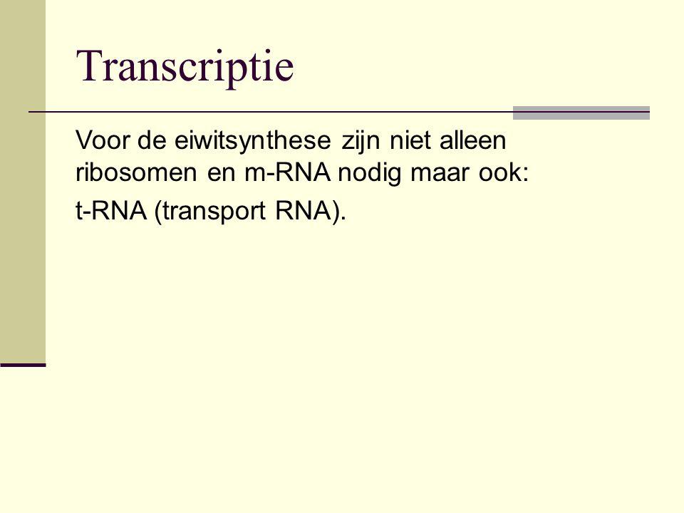 Transcriptie Voor de eiwitsynthese zijn niet alleen ribosomen en m-RNA nodig maar ook: t-RNA (transport RNA).