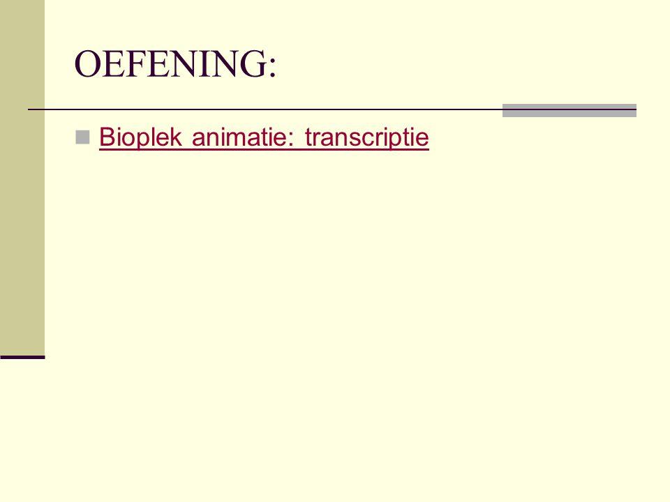 OEFENING: Bioplek animatie: transcriptie