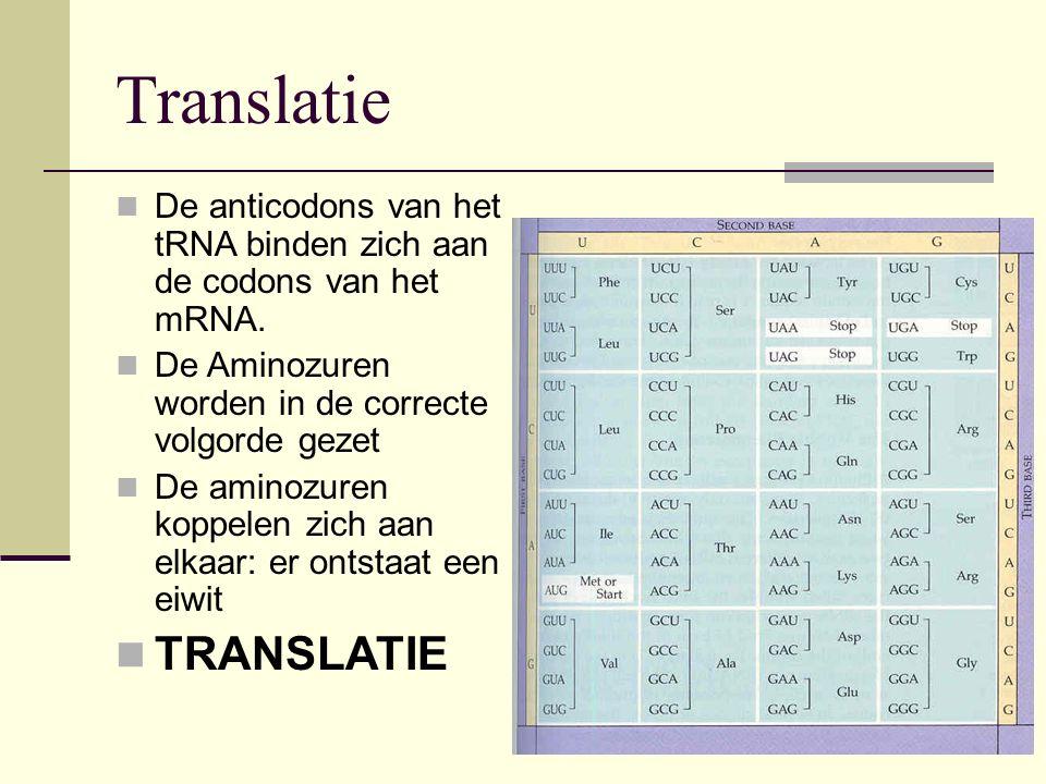 Translatie TRANSLATIE