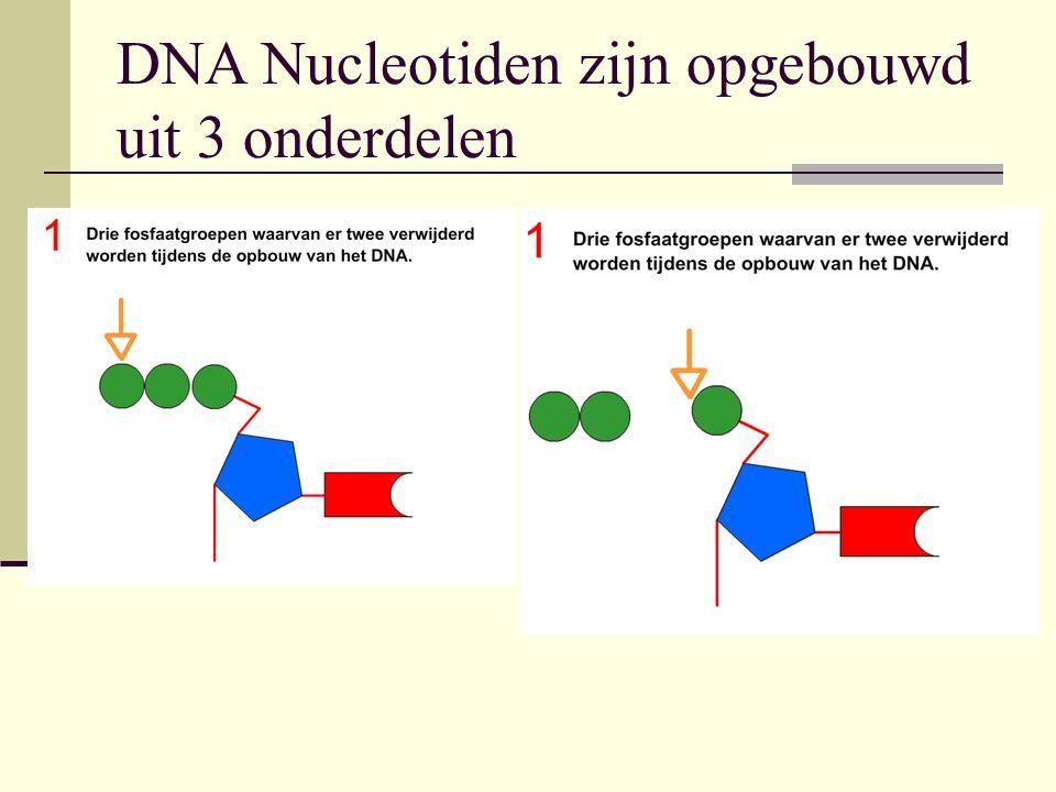 DNA Nucleotiden zijn opgebouwd uit 3 onderdelen