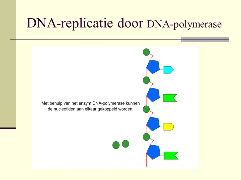 DNA-replicatie door DNA-polymerase