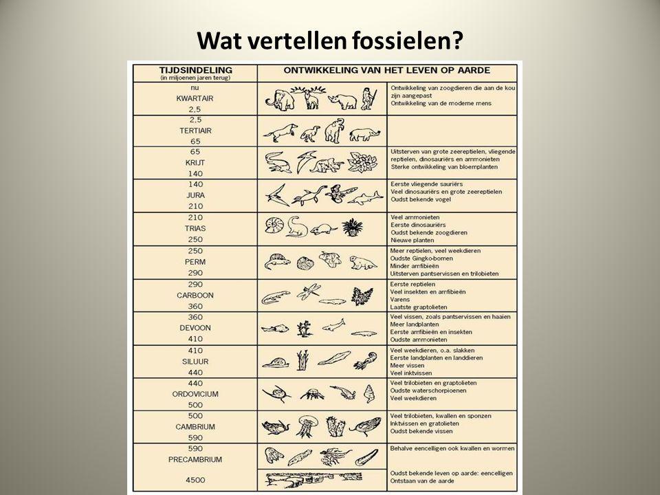 Wat vertellen fossielen