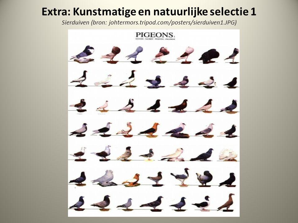Extra: Kunstmatige en natuurlijke selectie 1 Sierduiven (bron: johtermors.tripod.com/posters/sierduiven1.JPG)