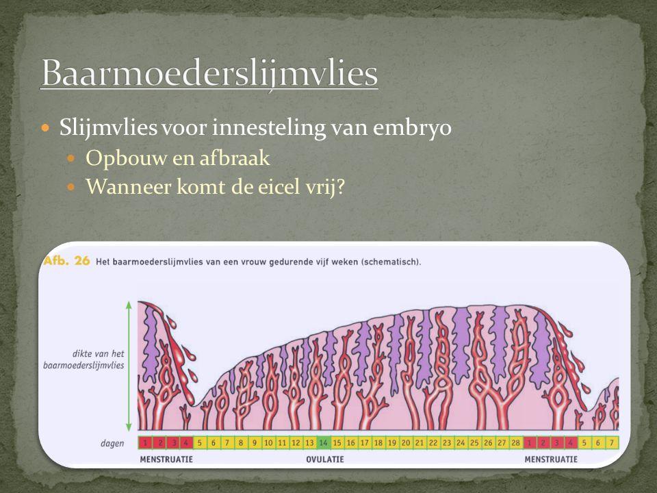 Baarmoederslijmvlies