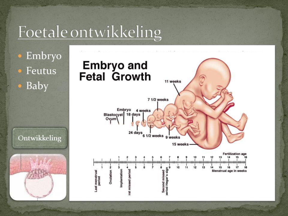 Foetale ontwikkeling Embryo Feutus Baby Ontwikkeling