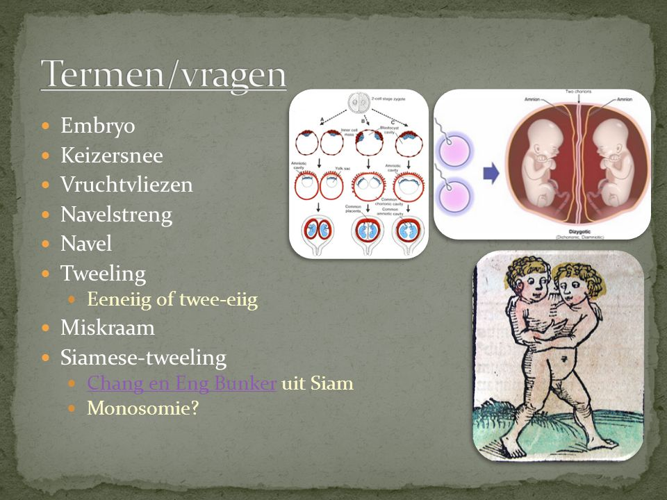 Termen/vragen Embryo Keizersnee Vruchtvliezen Navelstreng Navel