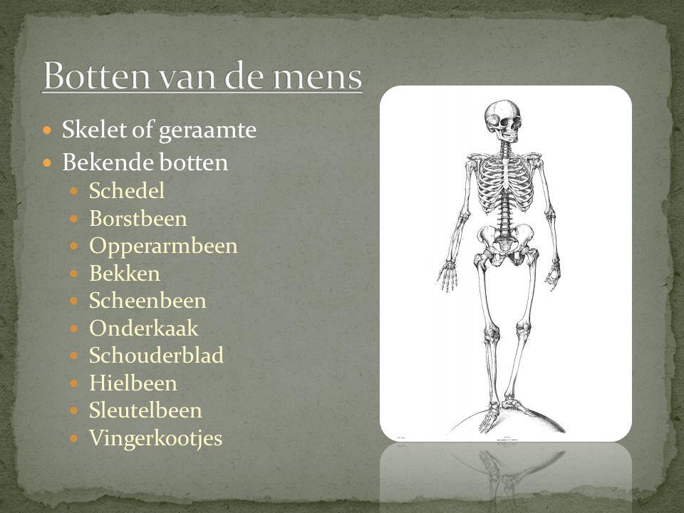 Botten van de mens Skelet of geraamte Bekende botten Schedel Borstbeen