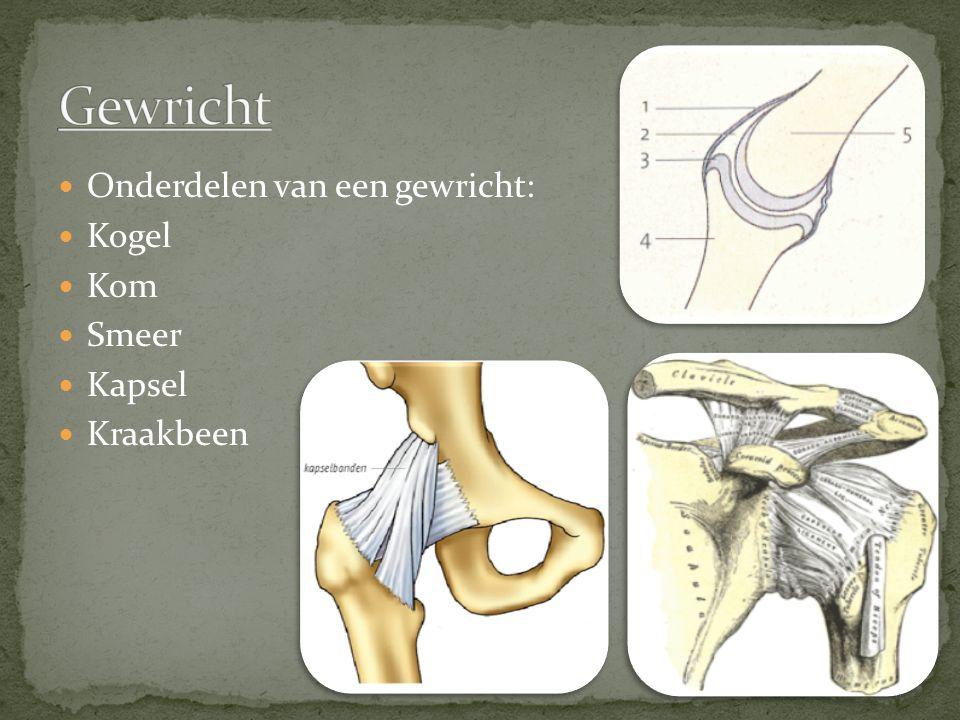 Gewricht Onderdelen van een gewricht: Kogel Kom Smeer Kapsel Kraakbeen
