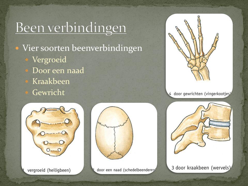 Been verbindingen Vier soorten beenverbindingen Vergroeid