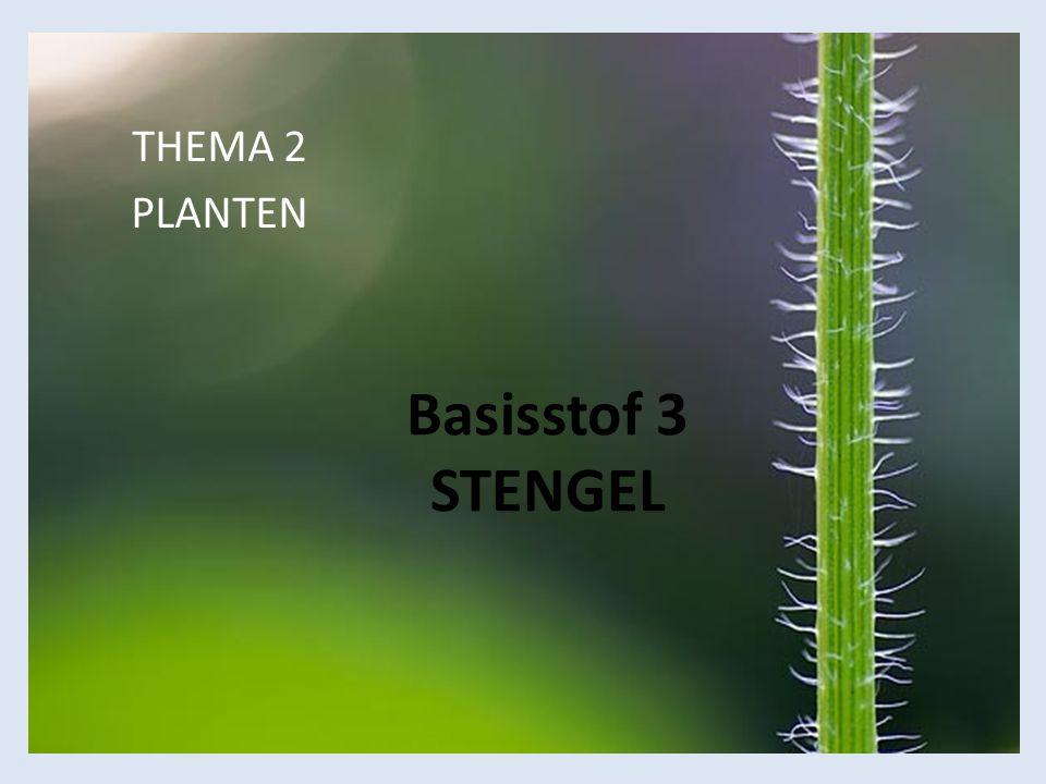THEMA 2 PLANTEN Basisstof 3 STENGEL