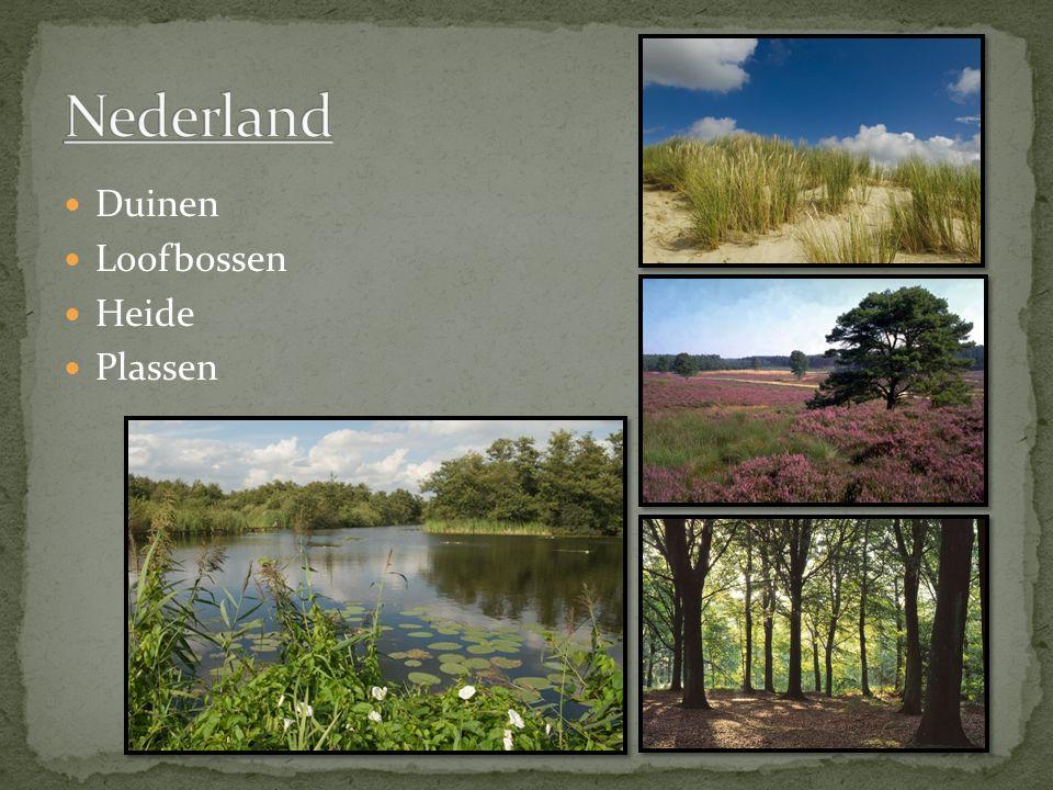 Nederland Duinen Loofbossen Heide Plassen