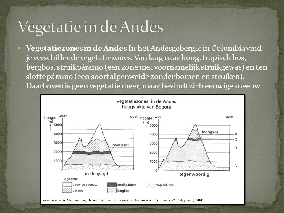 Vegetatie in de Andes