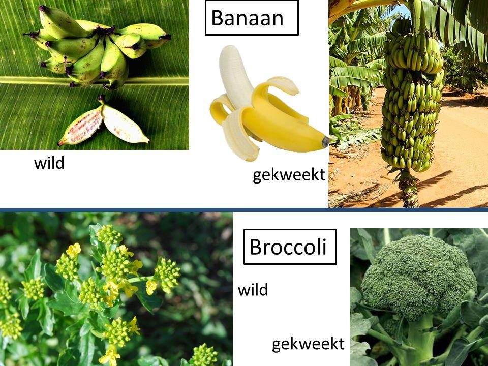 Banaan wild gekweekt Broccoli wild gekweekt