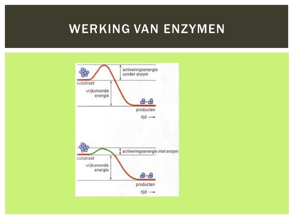 Werking van Enzymen