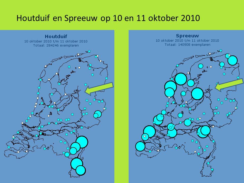 Houtduif en Spreeuw op 10 en 11 oktober 2010