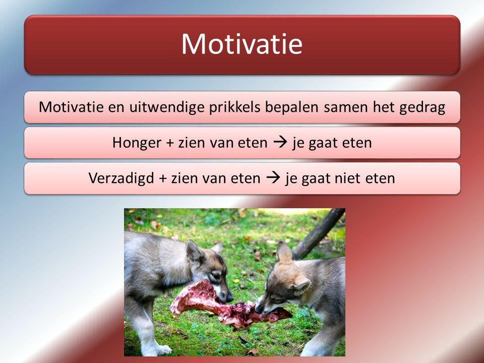Motivatie Motivatie en uitwendige prikkels bepalen samen het gedrag