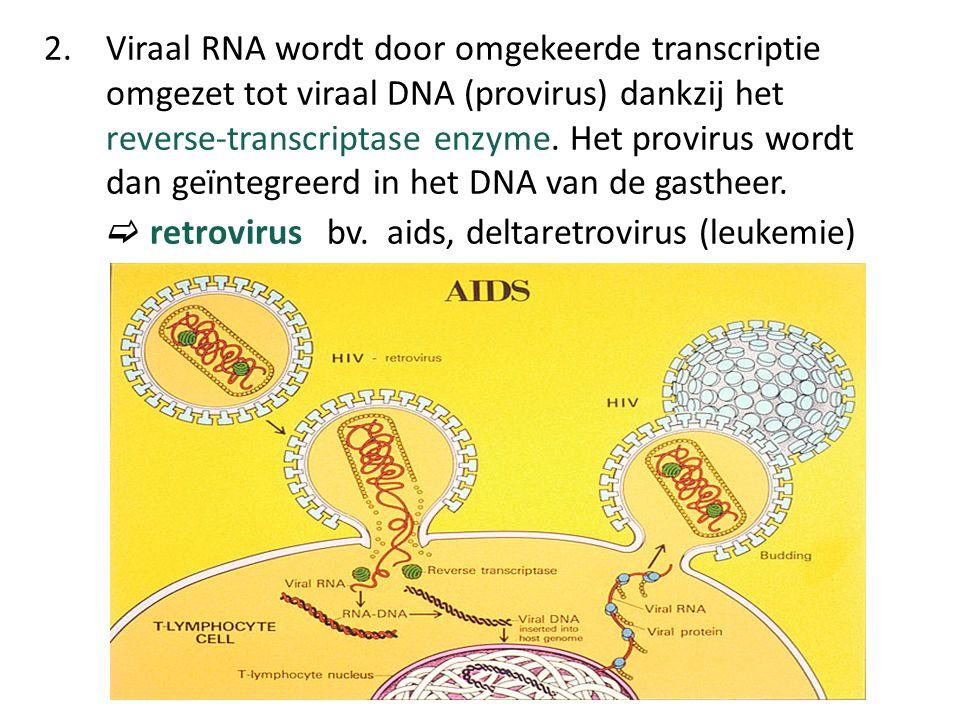 2. Viraal RNA wordt door omgekeerde transcriptie